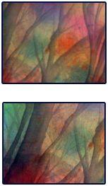 Rainbow Woodland by Kt