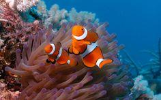 Resultado de imagem para coral reef