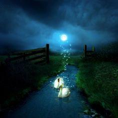 Magical Glastonbury/AVALON and Swan energy....