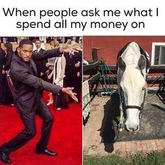 Horse Memes 17 Pics - Horses Funny - Funny Horse Meme - - Horse Memes 17 Pics The post Horse Memes 17 Pics appeared first on Gag Dad. Funny Horse Memes, Funny Horse Pictures, Funny Horses, Cute Horses, Funny Animal Memes, Pretty Horses, Beautiful Horses, Horse Humor, Cat Memes