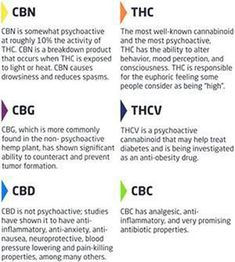 Cannabis Facts you should know Cannabis Plant, Weed Facts, Marijuana Recipes, Endocannabinoid System, Salud Natural, Medical Marijuana, Photography, Infographic, Messages