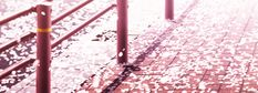 ☆**this is an animated gif~ please click to see the animation!**☆ from 'RideBack' ♥ realistic falling cherry blossoms, amazing animation, beautiful sakura anime scenery gif