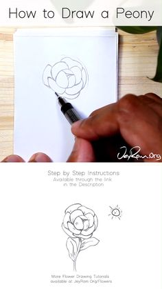 How to Draw a Peony Flower: Easy Step by Step Tutorial - Learn how to draw peony flowers with this simple step by step tutorial made for beginners. Flower Drawing Tutorials, Flower Sketches, Art Tutorials, Peony Drawing, Peony Painting, Drawing Flowers, Simple Flower Drawing, Pencil Art Drawings, Easy Drawings
