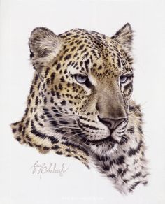 PORTRAITS OF THE BIG CATS 15