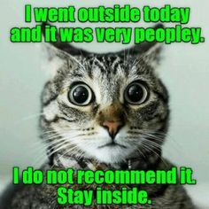 55 Of The Most Liked Cat Memes Of 2018 That Our Users Created On LolCats - crazy cats - Katzen Funny Animal Pictures, Cute Funny Animals, Funny Cute, Cute Cats, Adorable Kittens, Hilarious, Funniest Cat Memes, Funny Cat Memes, Cats Humor