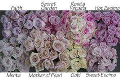 The Blush Rose Study includes Faith, Secret Garden, Rosita Vendela, Hot Escimo… Light Pink Flowers, Blush Flowers, Colorful Flowers, Beautiful Flowers, Wedding Flowers, Bride Flowers, Faith Rose, Mother Of Pearl Rose, Flower Chart