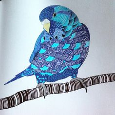 Animal kingdom colouring book I coloured in using pencil and slim felt pens. Love it!