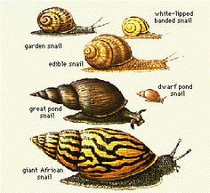 Vintage snail photo.