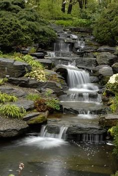 Cascading water,clear pools, and richly textured plants create a visually exciting display in your garden.