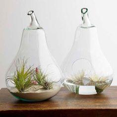 Captive Creativity: My New Plant Love: Air Plants