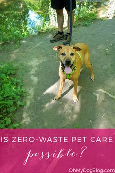 Zero-waste pet care is impossible. Here are 5 simple things you can do today! Online Friends, Best Friends, Pet Bunny Rabbits, Pet Dogs, Pets, High Resolution Photos, Take Care Of Yourself, Zero Waste, You Can Do