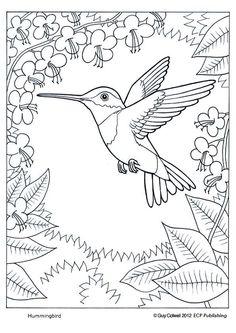 humming bird really cute