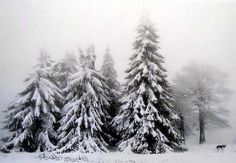 snow and tree image