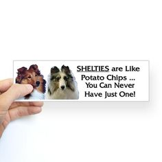 Sheltie sticker true ...