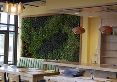 Interior Living Wall with a custom artistic plant design. Over Easy: A Daytime Eatery in Colo Springs Green Walls, Plant Design, Colorado Springs, Interior, Outdoor Decor, Easy, Plants, Home Decor, Decoration Home