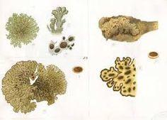 Image result for botanical illustration ferns and moss