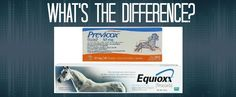 Previcox vs. Equioxx: What's the Big Deal? - IrongateIrongate