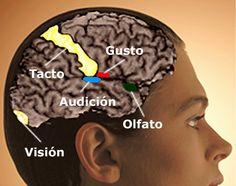 Cómo enseñar a los niños el funcionamiento del sistema nervioso