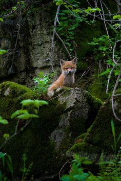 Little fox <3