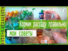Урожайный огород - YouTube