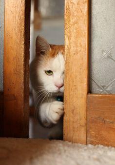 かご猫 Blog おじゃまします