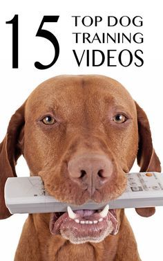 15 great top training videos to help you train your dog @KaufmannsPuppy