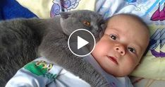 MOST Crazy Cats Annoying Babies If You Laugh You Lose Challenge Funny Cats Videos by Animals TV