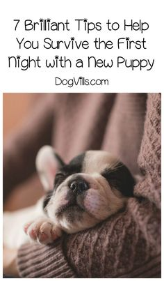 Wondering how you will survive the first night with a puppy? Check out our dog training tips and tricks for helping tiny spot settle in!
