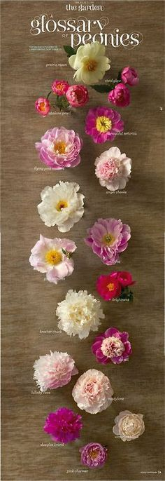 My favorite flower: Peonies.  All Things Girly & Beautiful