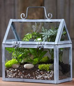 Image result for Orchid Terrarium Kit