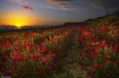 Place, European Garden Photography Award, International Garden Photographer of the Year 2015 Scenery Photography, Photography Awards, Amazing Photography, Creative Landscape, Landscape Photos, European Garden, Evening Sunset, Misty Forest, National Geographic Photos