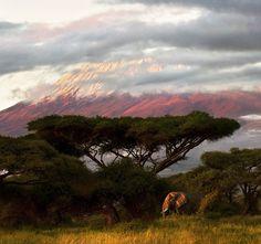 Килиманджаро на рассвете, Кения