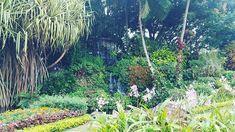 #suroita #davao #prayermountain Davao, Prayers, Plants, Instagram, Prayer, Beans, Plant, Planets