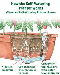 Best 9 simple self watering planters to reduce gardeners workload growing vegetables in pots and planters workwithnaturefo