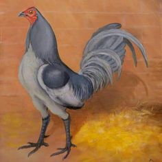 Self Blue Cock