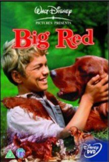 Big Red (1962) A wealthy sportsman's decision to hire a backwoods orphan to exercise a champion Irish Setter has unexpected consequences.