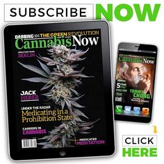 THC Extraction: How to Turn Trim to Profits   Cannabis Now Magazine