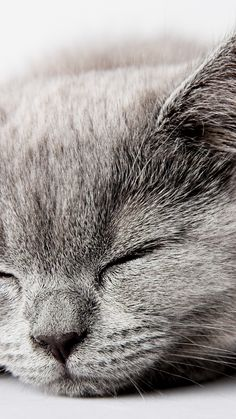 42 New Ideas For Cats Wallpaper Iphone Grey Grey Cat Wallpaper, Iphone Wallpaper Cat, Tier Wallpaper, Animal Wallpaper, Trendy Wallpaper, Walpapers Iphone, Cat Background, Grey Cats, Cute Cats And Kittens