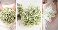 Gypsophila vs babies breath - more green