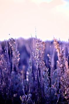 Sagebrush - Morning in Wyoming by Terri Meyers
