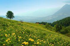 Alpago, primavera