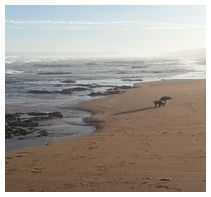 Pet Friendly Accommodation, Holiday Accommodation, South Africa, Beach House, Patio, Garden, Outdoor, Beach Homes, Outdoors