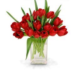 Tulipanes 4