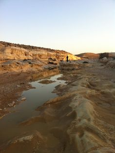 The Negev after rain Israel