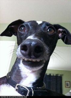 Silly doggy smile