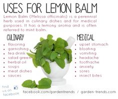 USES FOR LEMON BALM - Lemon balm is a perennial herb used in culinary dishes and for medical purposes. It has a lemony aroma and is often referred to as mint balm.