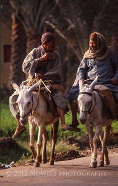 donkey transportation in Egypt