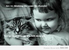 I hate cats.  But this little girl is hilarious!