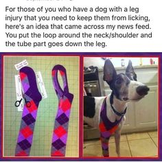 Such a smart idea! How to keep a dog from licking a leg or paw wound. #dogtips…