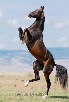 Another beauty! #horse